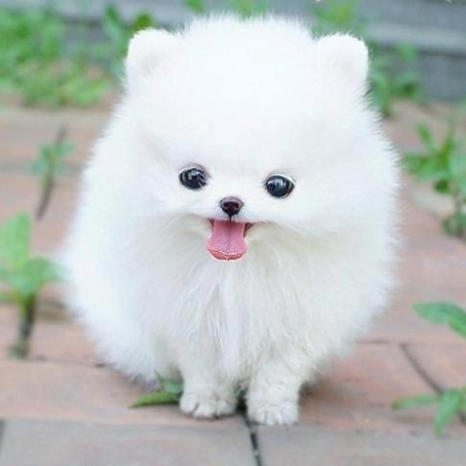 Cute white dog.