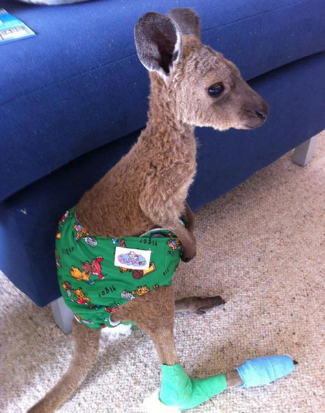 A kangaroo wearing pants is definitely one of the cute baby animals of Australia.
