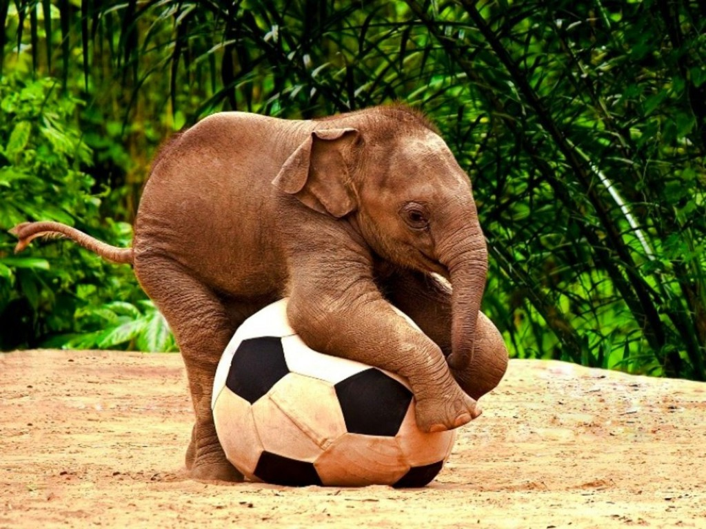 A baby elephant playing with a giant football is definitely one of the cute baby animals of Africa.