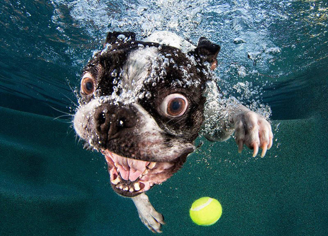 Underwater Dogs In Swimming Pools