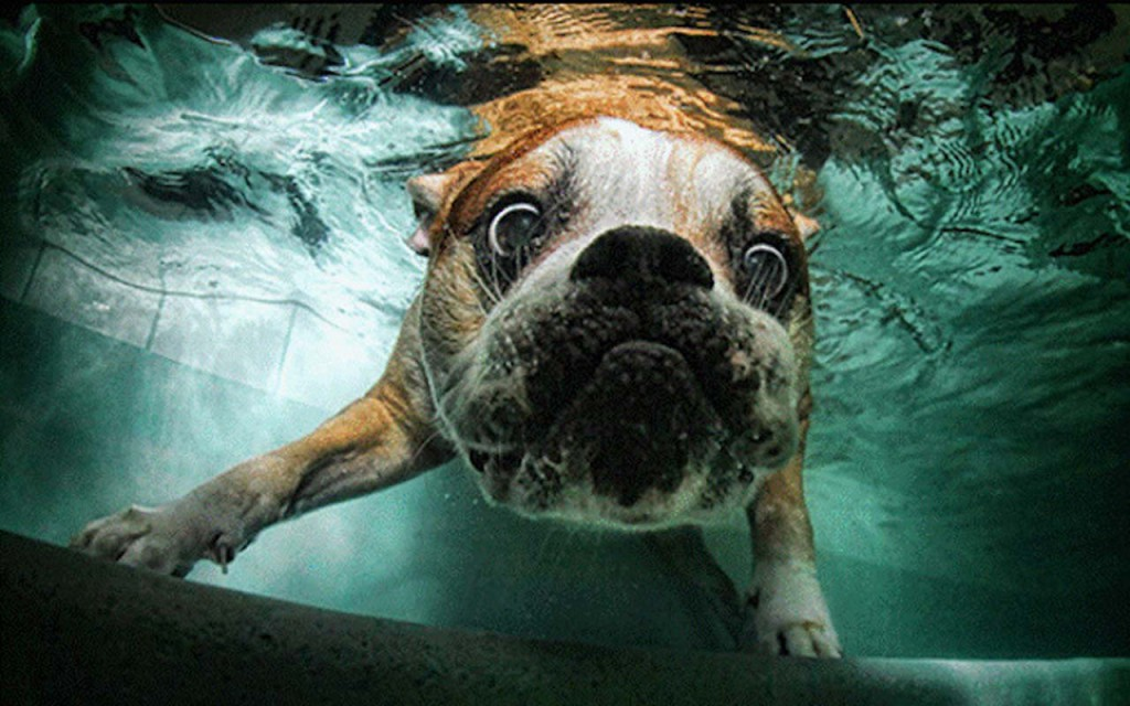 Underwater dogs in swimming pools are hilarious.