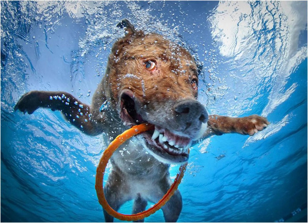 Underwater dog with a ring in his mouth.