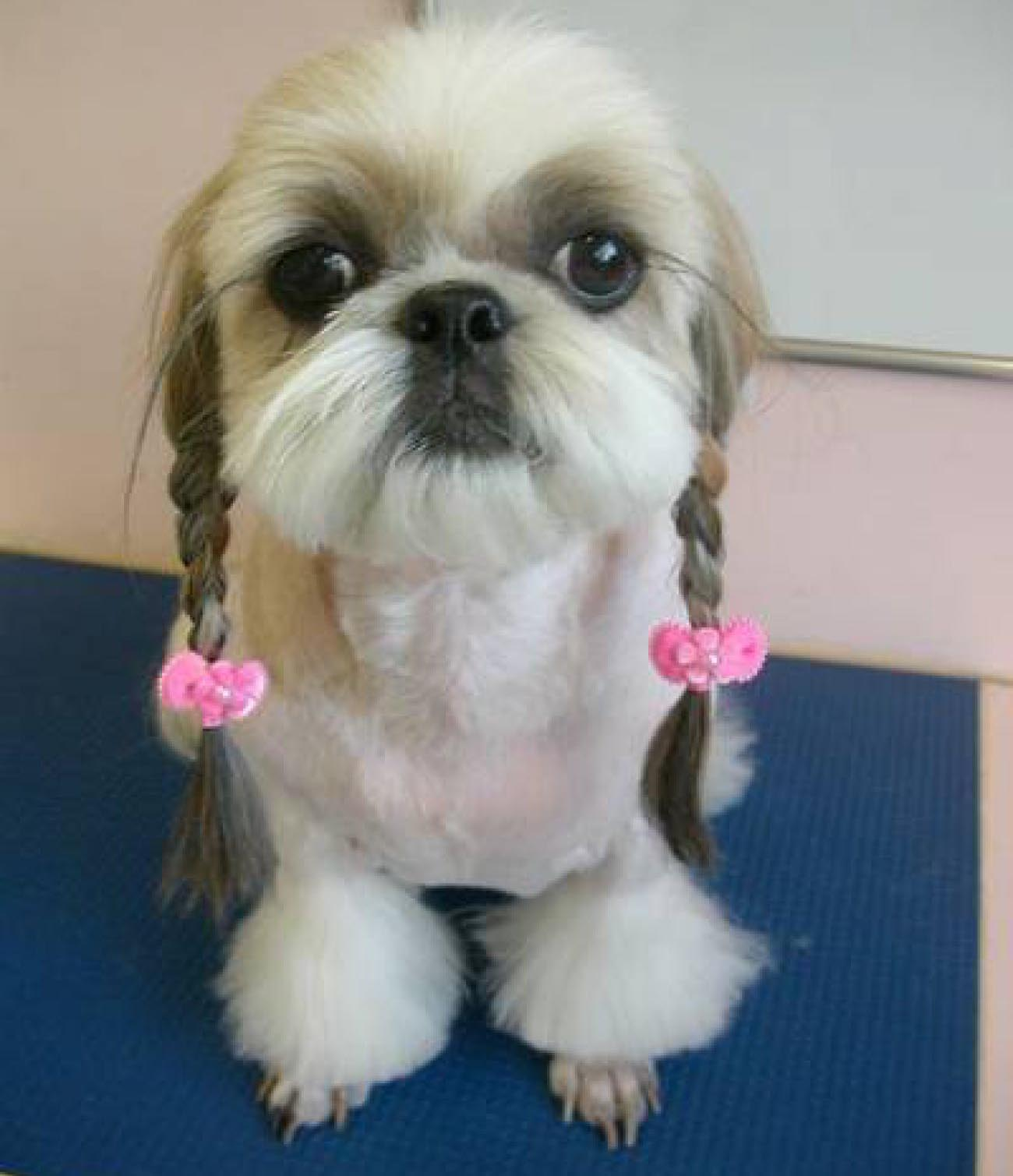Amazing Hair Bows Bow Adorable Dog - Dog-with-Pigtails  Trends_24387  .jpg