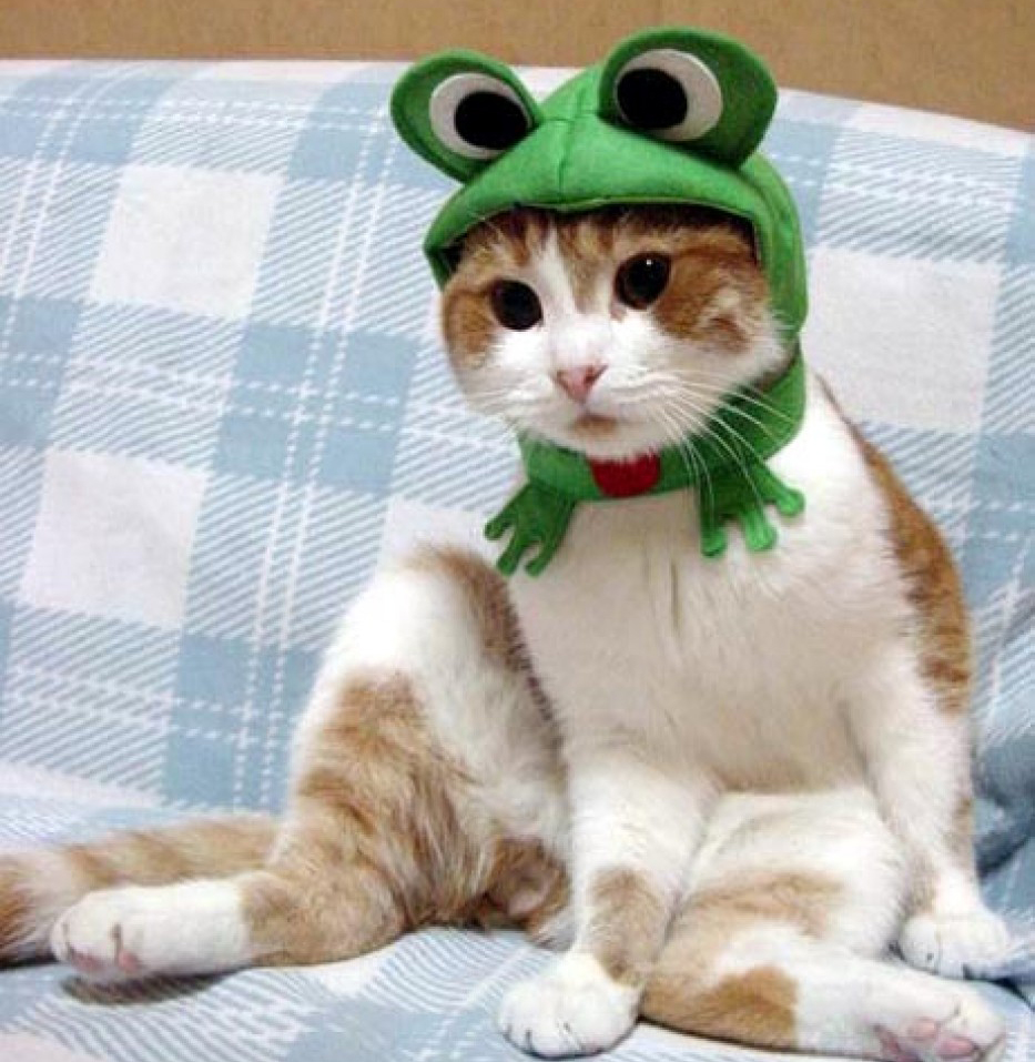 A cat wearing a green frog hat, sitting on a couch - Cats In Hats.