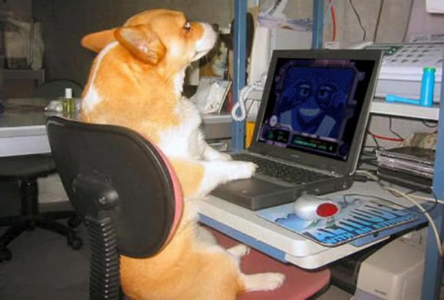 A dog sitting at a desk using a computer - Dogs Acting Like Humans.