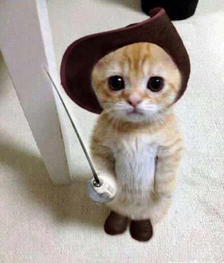 A real cat dressed as Puss In Boots - Cats In Hats.