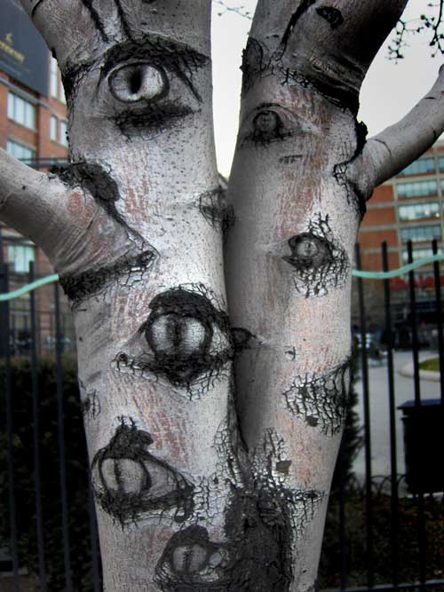 A tree in the city that appears to have many eyes - The Trees Have Eyes