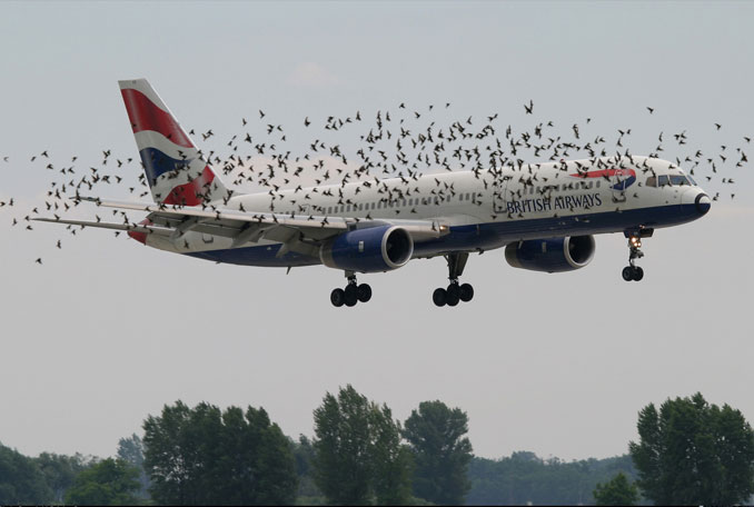 A Photo Of A Bird Strike On A British Airways Jet - 10 Eerie Photos That Will Send Shivers Down Your Spine