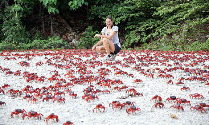 Christmas Island red crabs - 10 photos you won't believe weren't photoshopped.