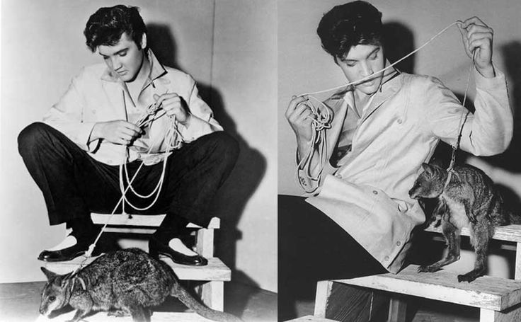 Elvis Presley owned a strange pet