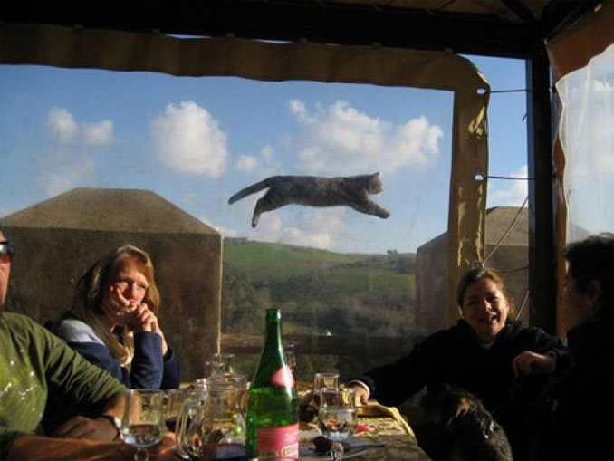 Photo of a flying cat - 10 photos you won't believe weren't photoshopped.