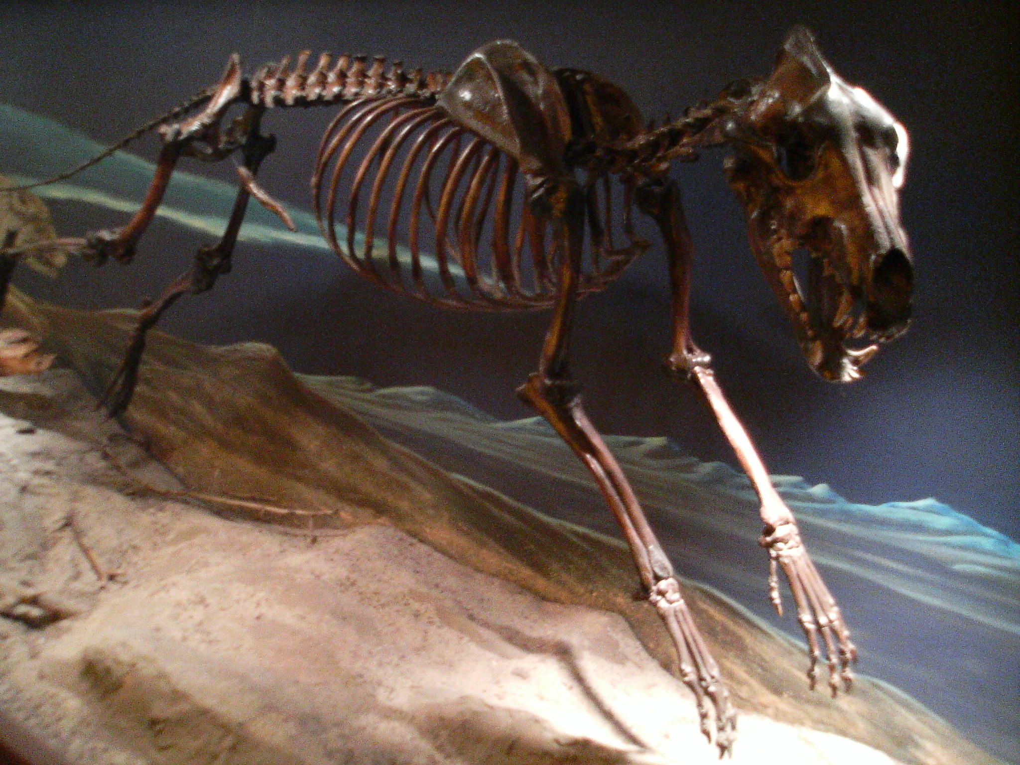 10 Massive Prehistoric Animals That Could Tear Your Face ...