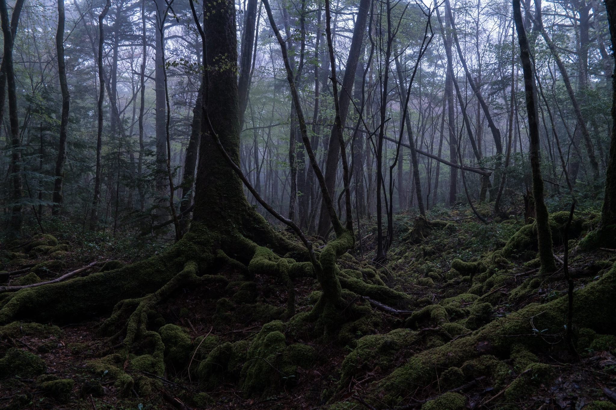 5 most haunted forests in the world slapped ham