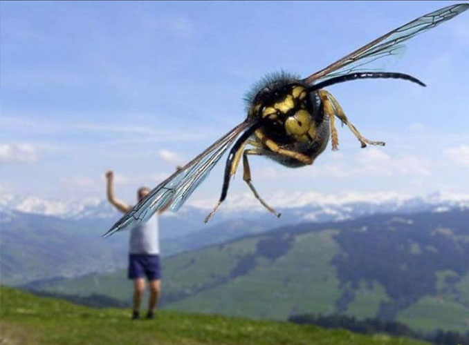 A photo of a giant bee - 10 Animal Photos Taken At Just The Right Time
