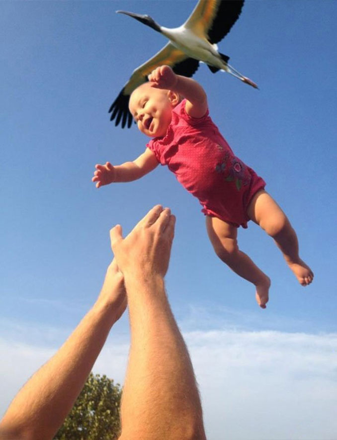 A photo of a stork delivering a baby - 20 Funny Animal Photos You Have To See