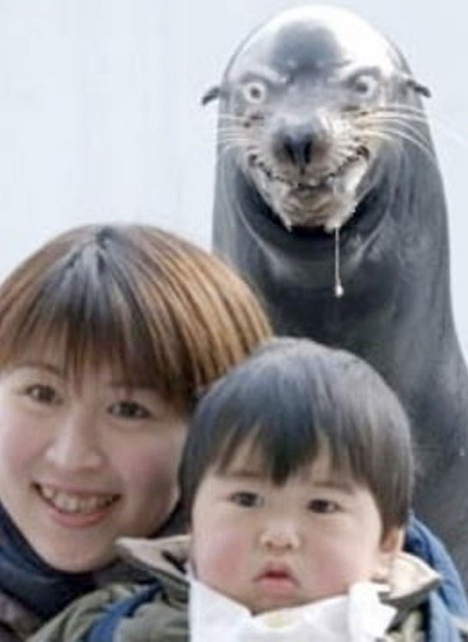 An angry seal photobomb - 20 WTF Photos You Just Have To See