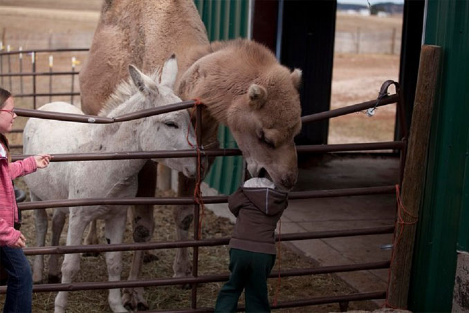 A camel biting a child - 20 WTF Photos You Just Have To See