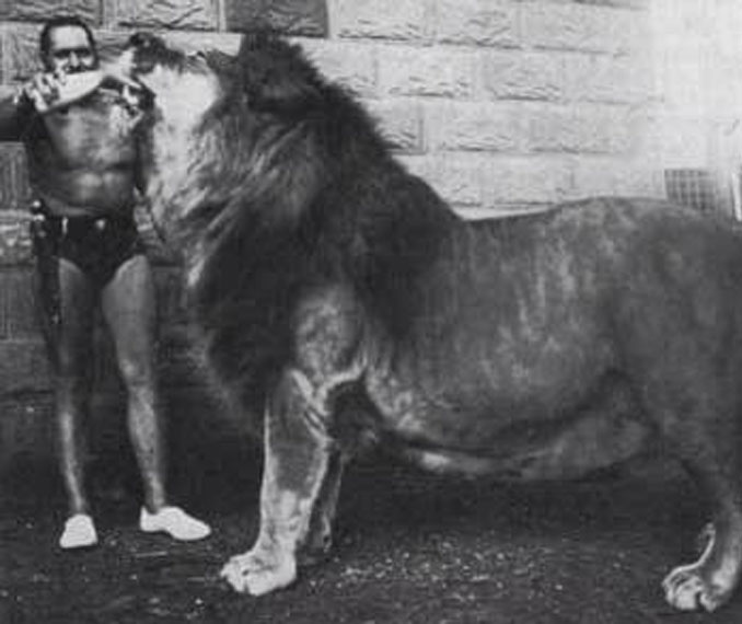 Simba the pet lion - 10 Pets That Killed Their Owners