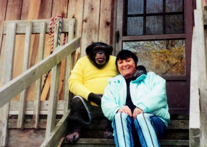 Travis the chimp - 10 Pets That Killed Their Owners
