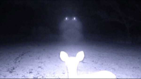 Creepy trail cam photos you have to see