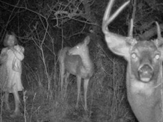 Creepy trail cam photos you have to see!