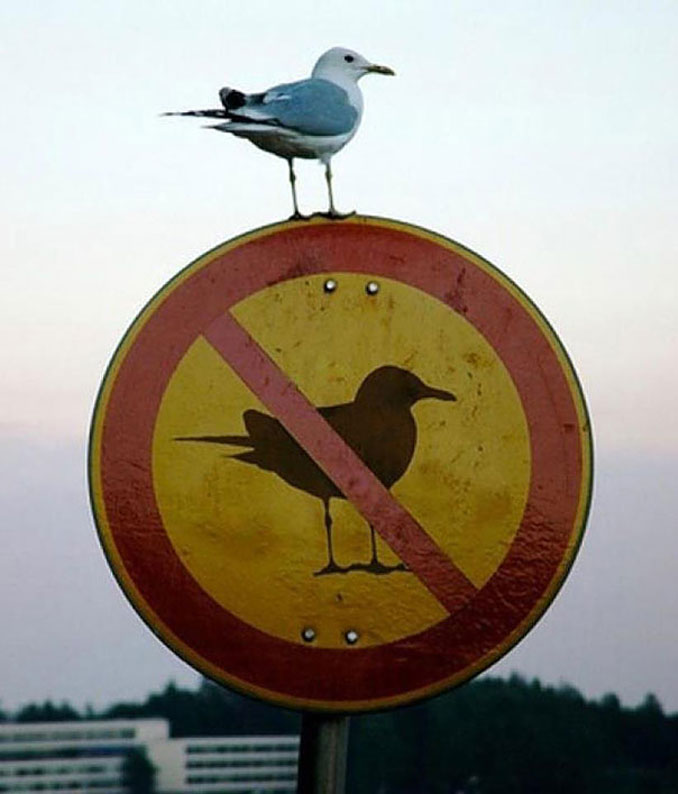 A seagull perched on a NO SEAGULL sign - 20 Funny Animal Photos You Have To See