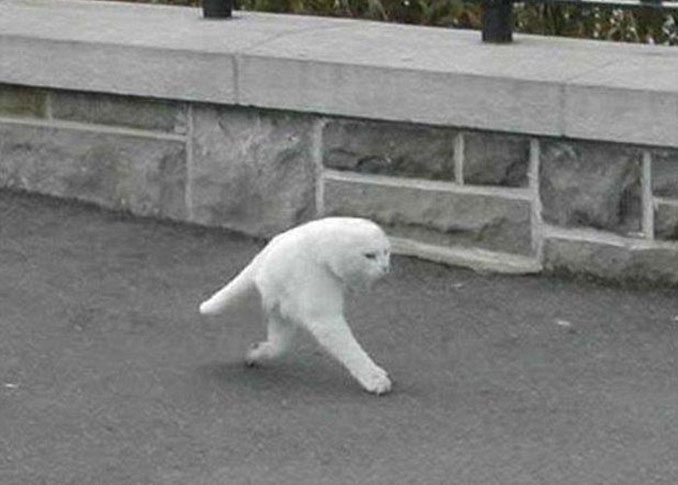 A strange white cat with two legs seen on Google Street View.