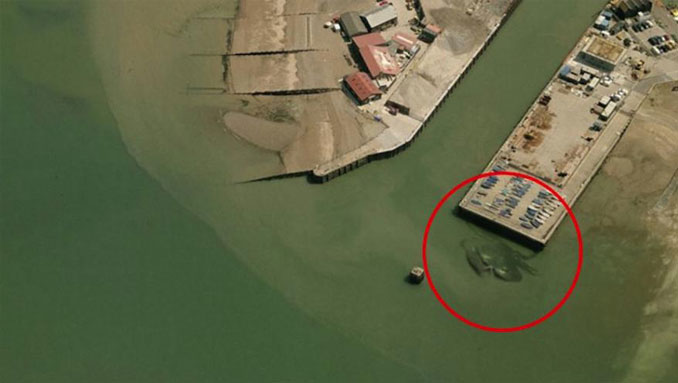 A giant crab seen on Google Earth.