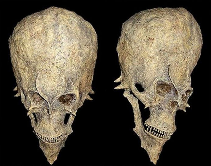 A mysterious photo of a skull discovered in Africa that is 14 million years old.