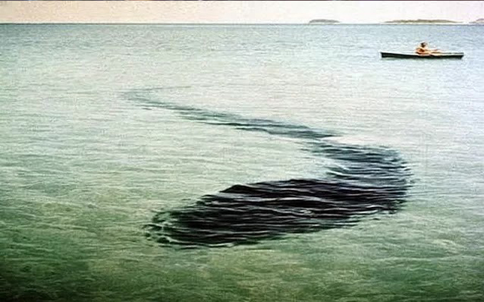 The Hook Island Sea Monster - 10 Photos That Should Not Exist