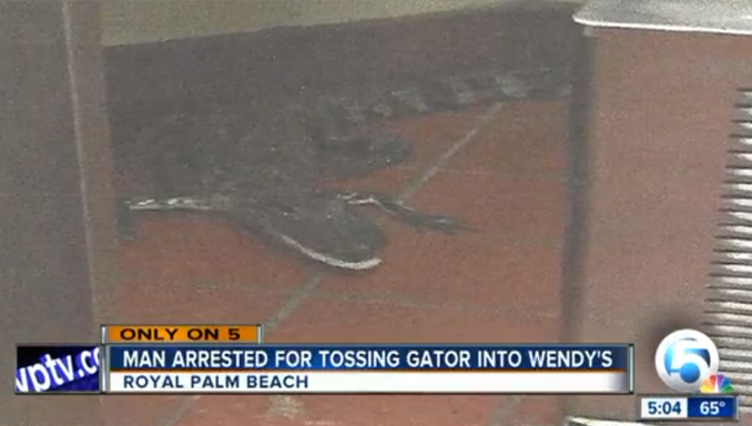 Alligator in Wendy's - 10 Dumbest Criminals Of All Time