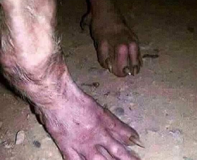 Monster's feet caught on trail camera - 10 Trail Camera Photos That Cannot Be Explained