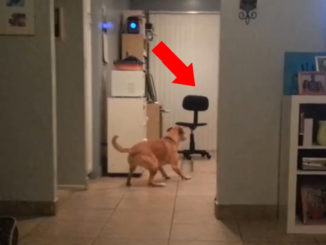 10 Pets That Saw Something Their Owners Couldn't