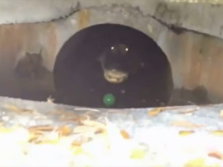 10 Creepiest Things Discovered Underground