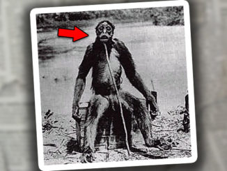 You Won't Believe What's Been Discovered in the Amazon Jungle