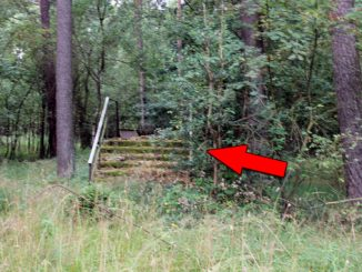 Stairs in the Woods Phenomenon Is Freaking People Out